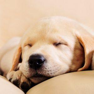 night waking puppies