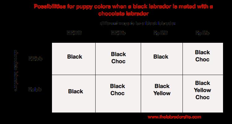 black x choc