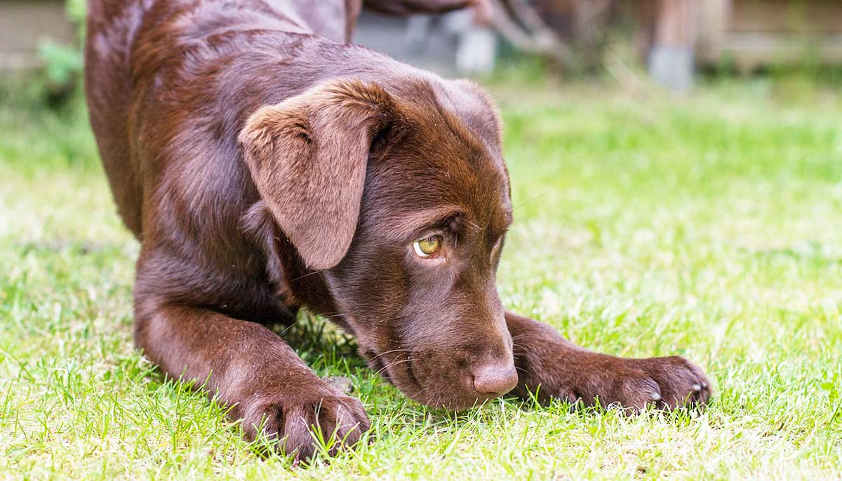 inherited diseases in dogs