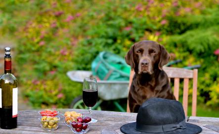 Older Dog Refuses To Eat Dog Food