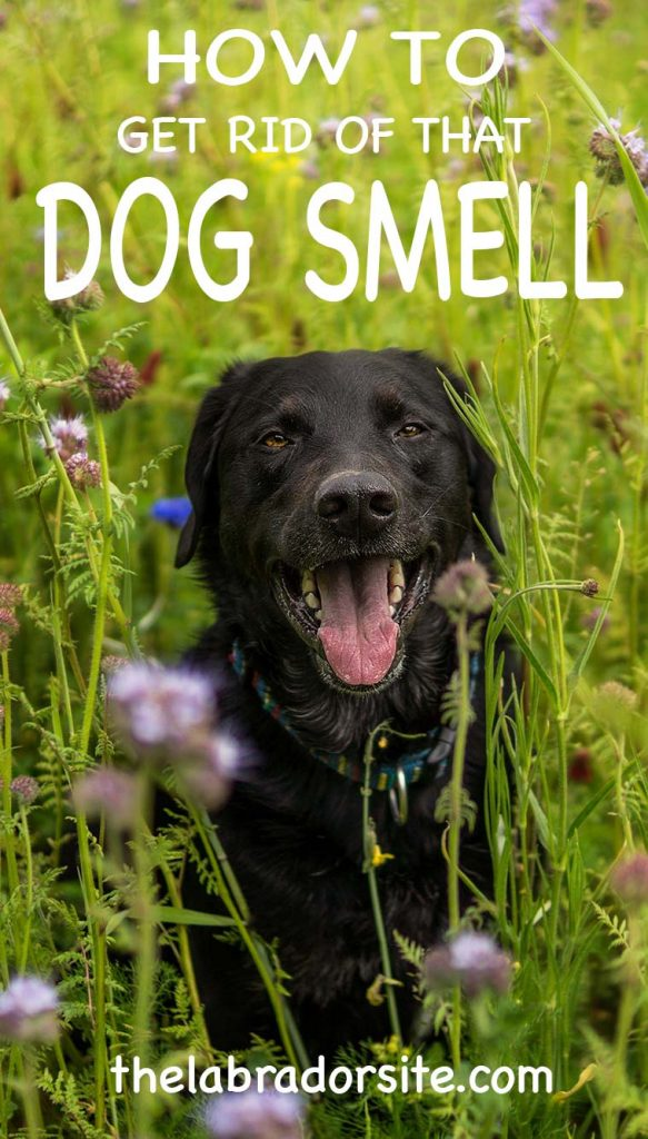 How To Get Rid Of Smelly Dog