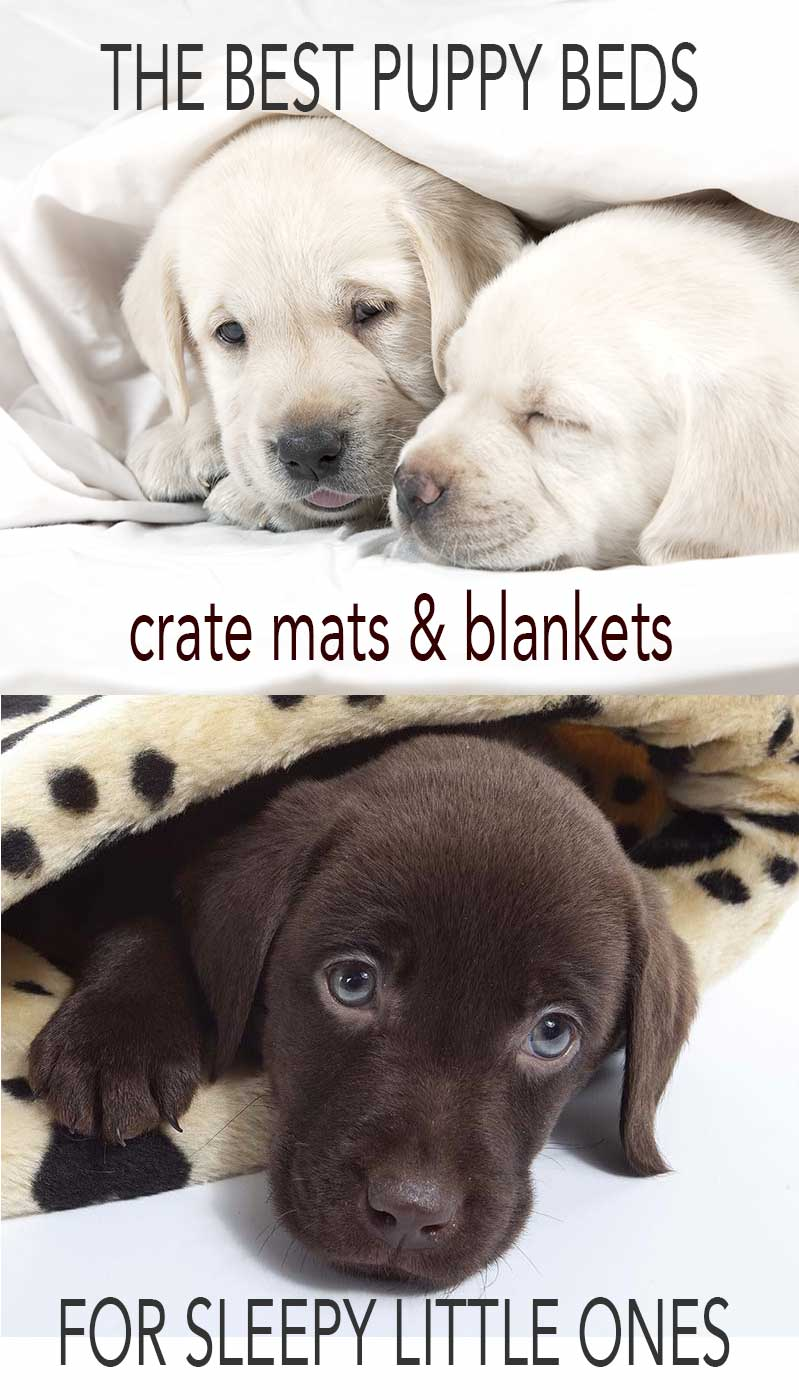 co bed pink hoodsie dog puppy cute beds