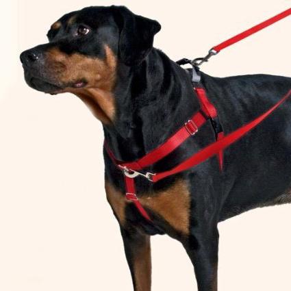 Freedom No-Pull Dog Harness - The Labrador Site