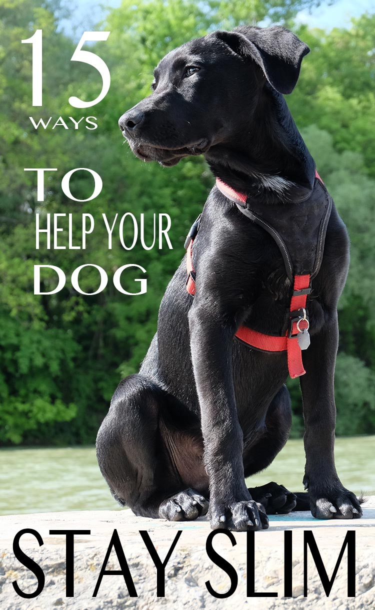 15 great ways to help your dog stay slim and healthy