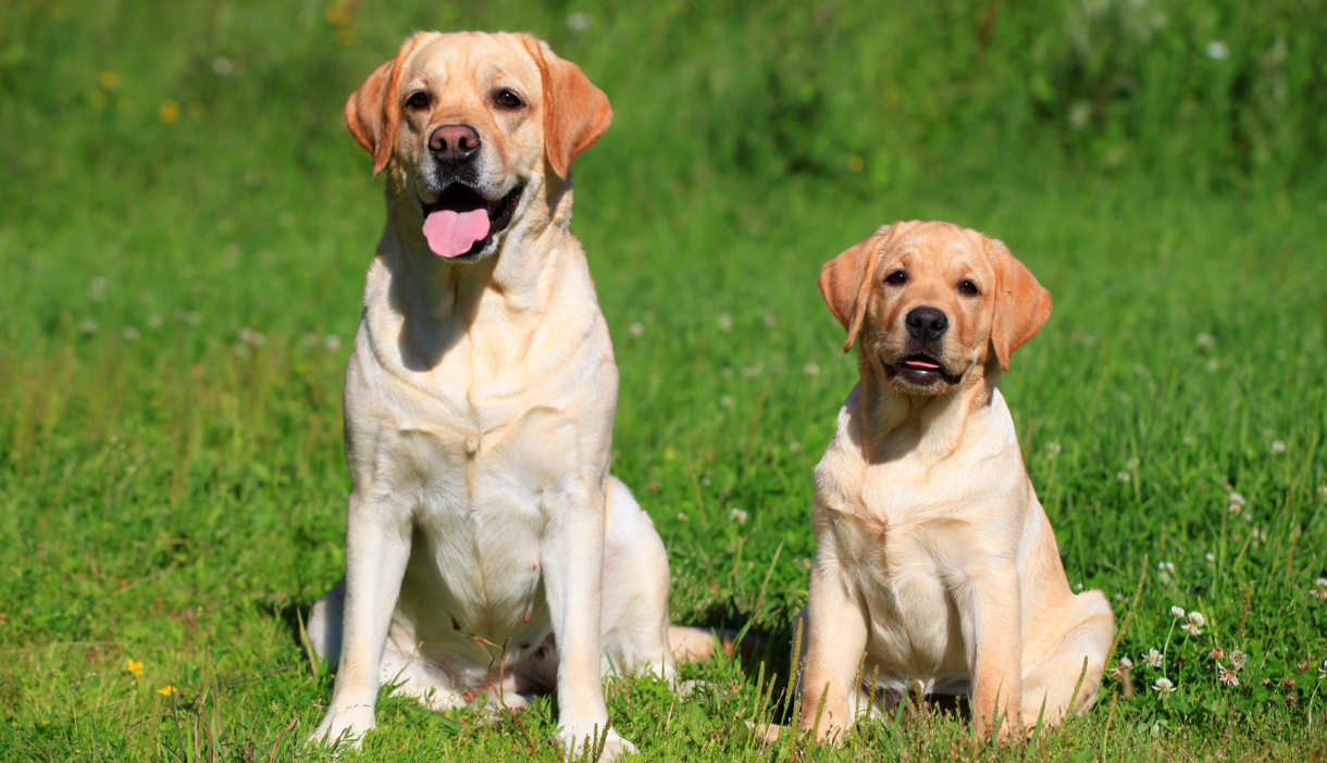 Best Recall Training For Dogs