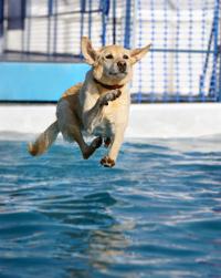 dog.dog show,agility