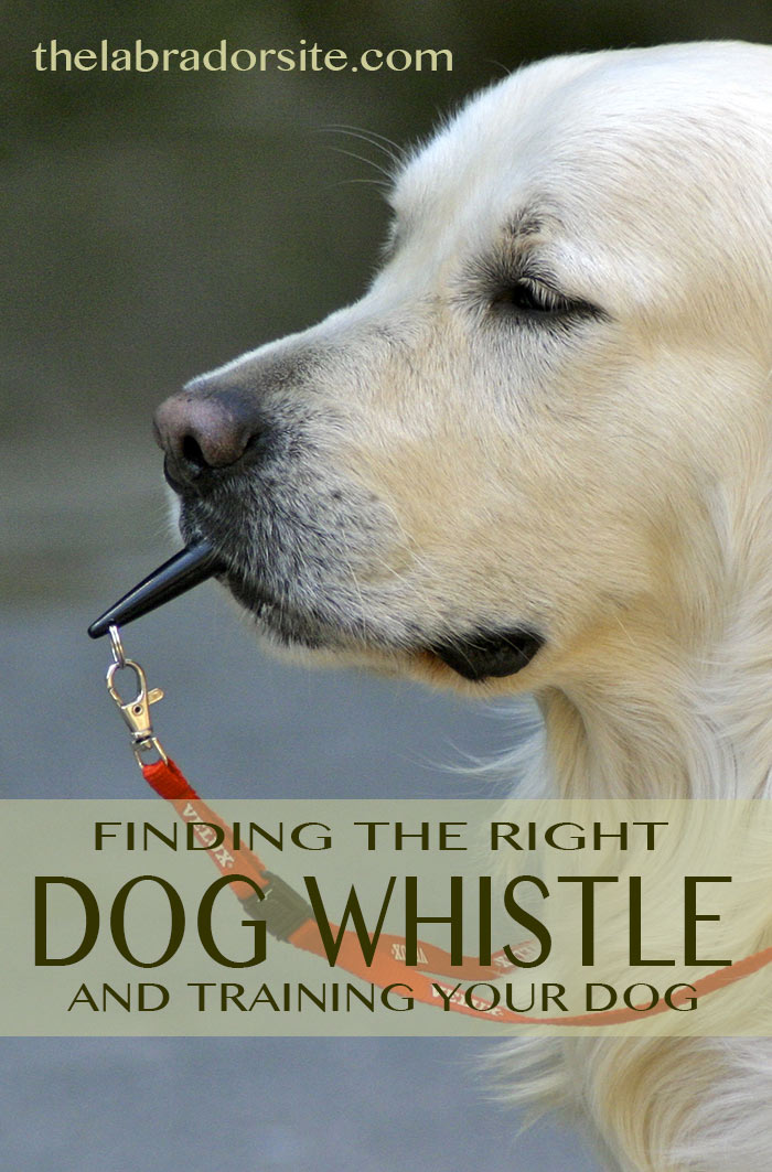 Help with choosing the best dog whistle and how to use a whistle to train your dog