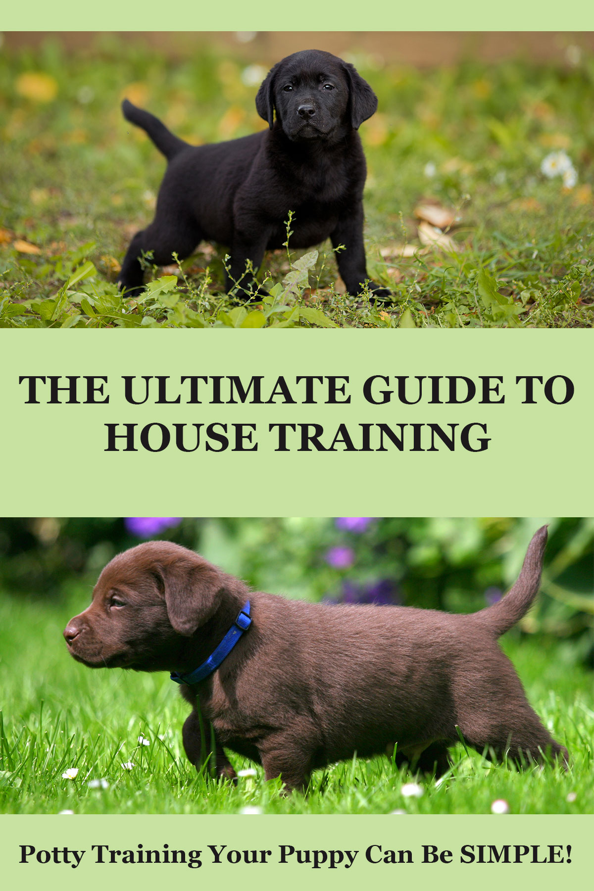 A complete and simple guide to potty training your puppy - from the Labrador Site
