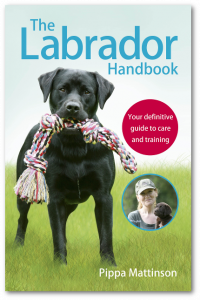 labrador-jacket-400-shadow