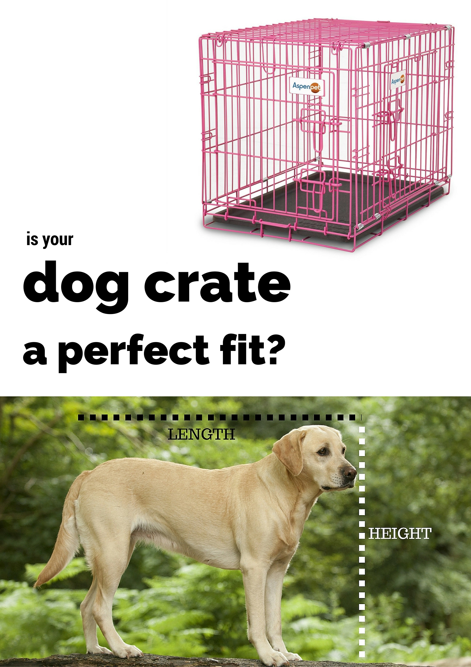Crate Training Your Dogs