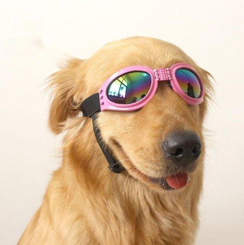 Labrador Names Hundreds Of Great Ideas To Help You Name