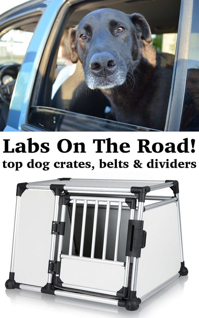 How Long Can You Crate A Dog While At Work