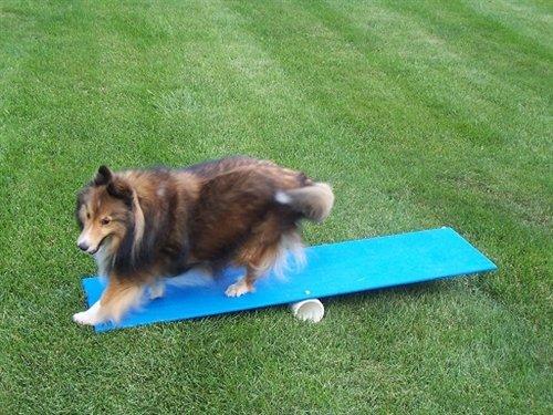 Dog Agility Equipment The Labrador Site