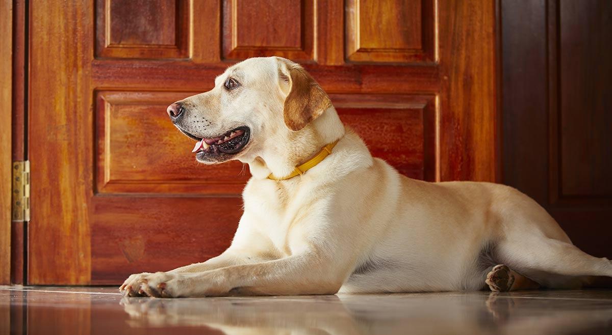 Resultado de imagen para Labrador door locked