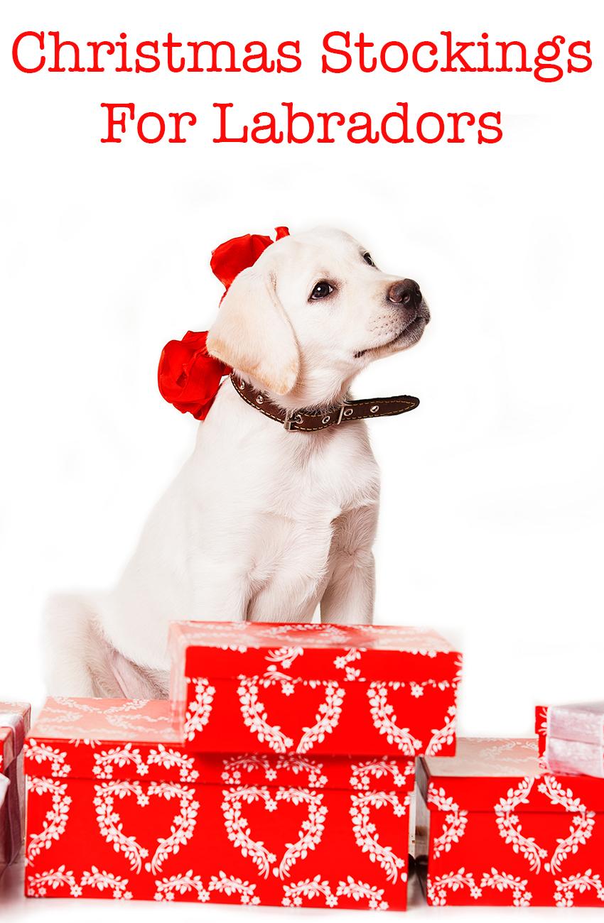 christmas-stockings-for-labradors