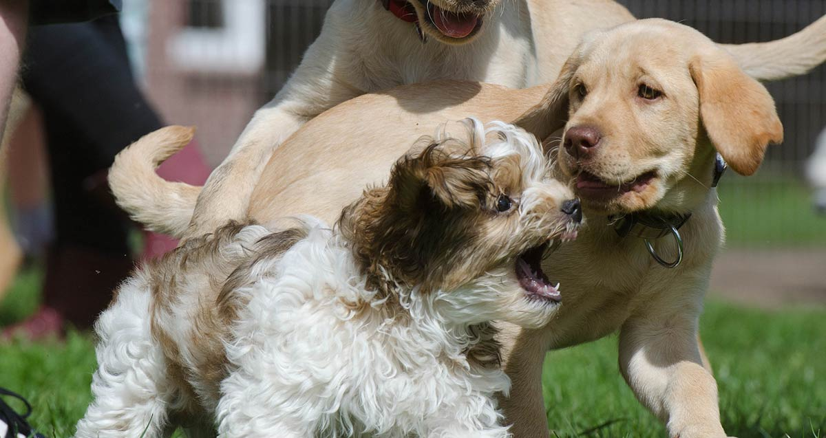 How to calm an over excited puppy the labrador site check out our tips on how to calm your excited puppy m4hsunfo Images