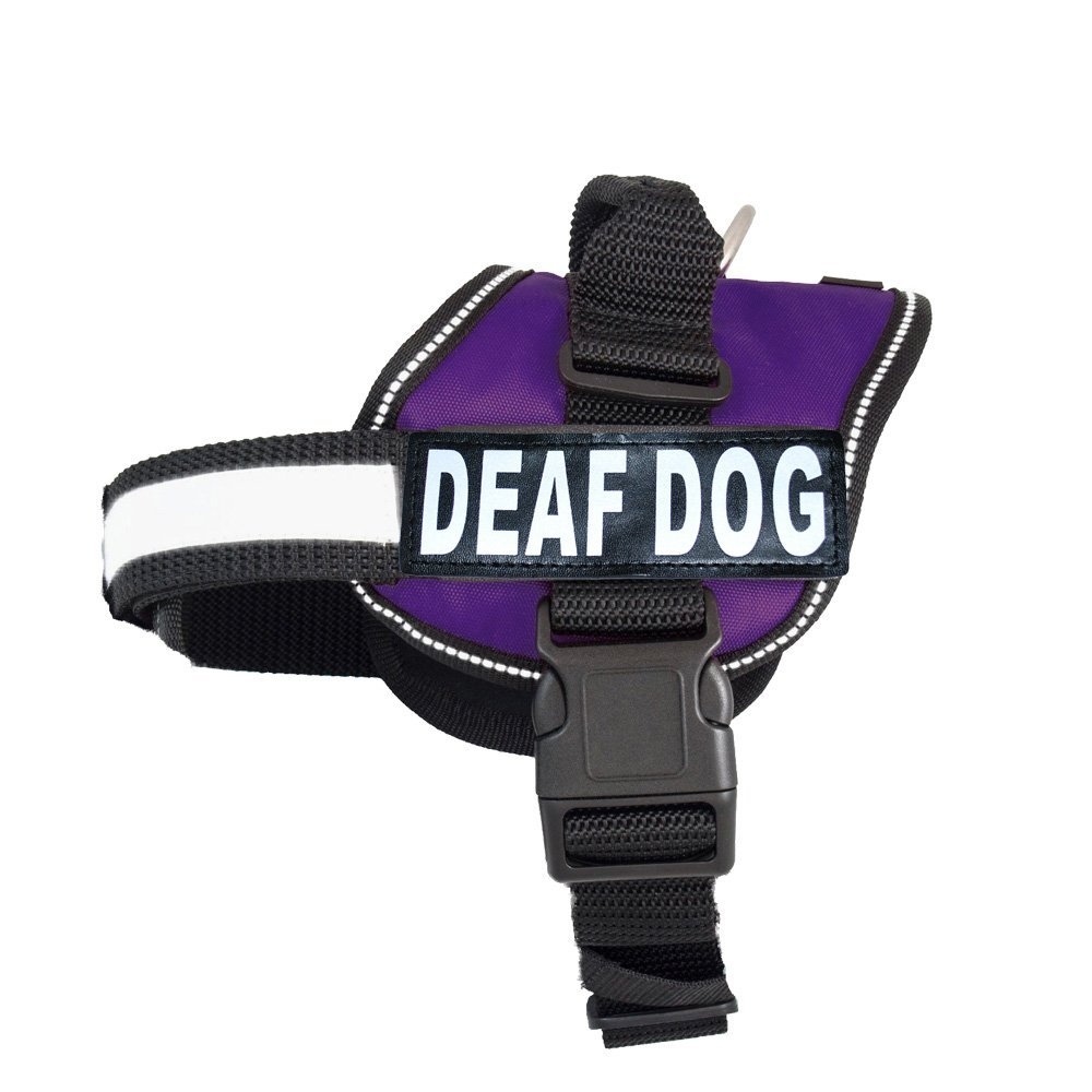 Training Deaf Dog Vibrating Collar