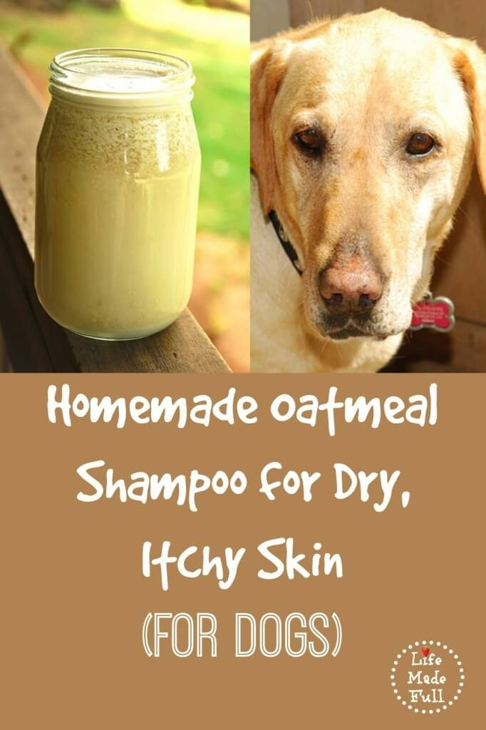 How To Make Oatmeal Shampoo For Dog