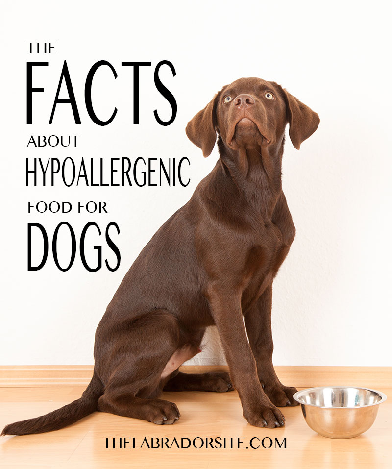 Hypoallergenic dogs food - the facts you need to know