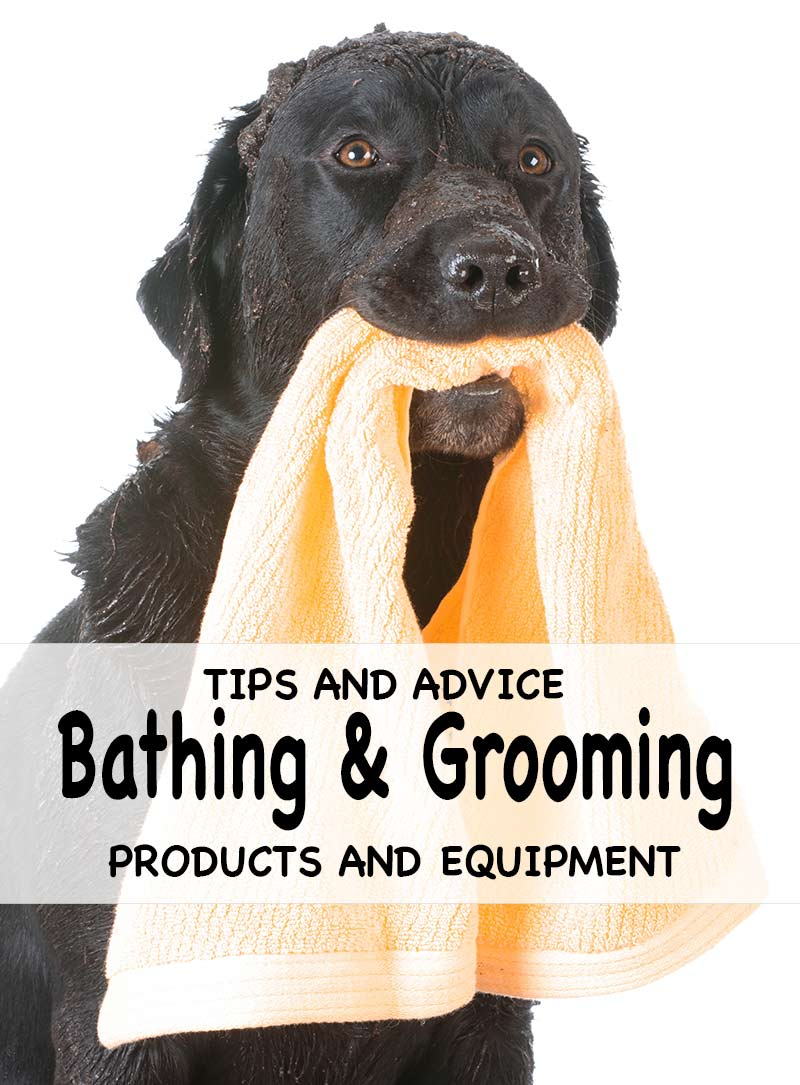 Smelly Dog Grooming