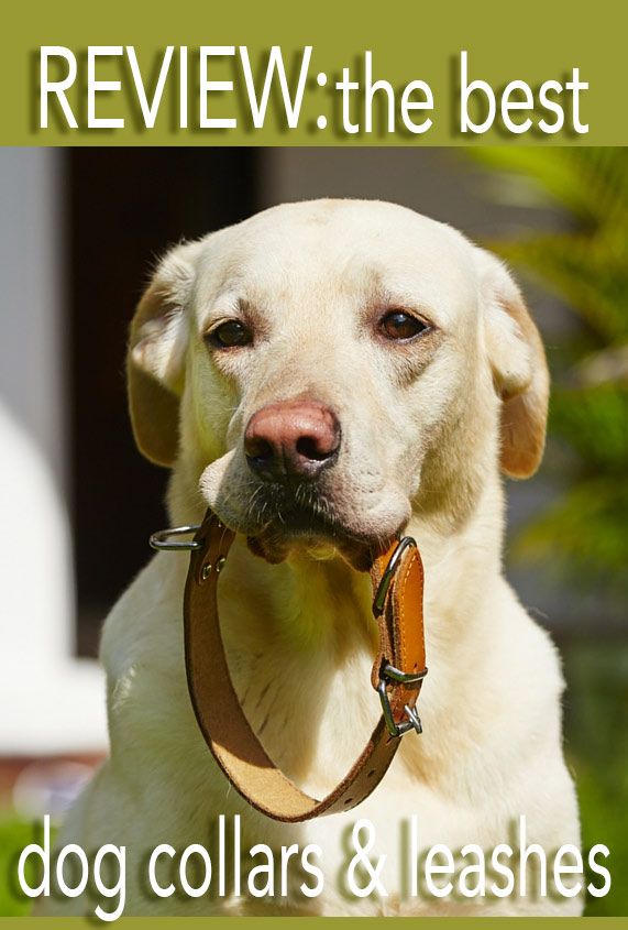 the very best dog collars and leashes