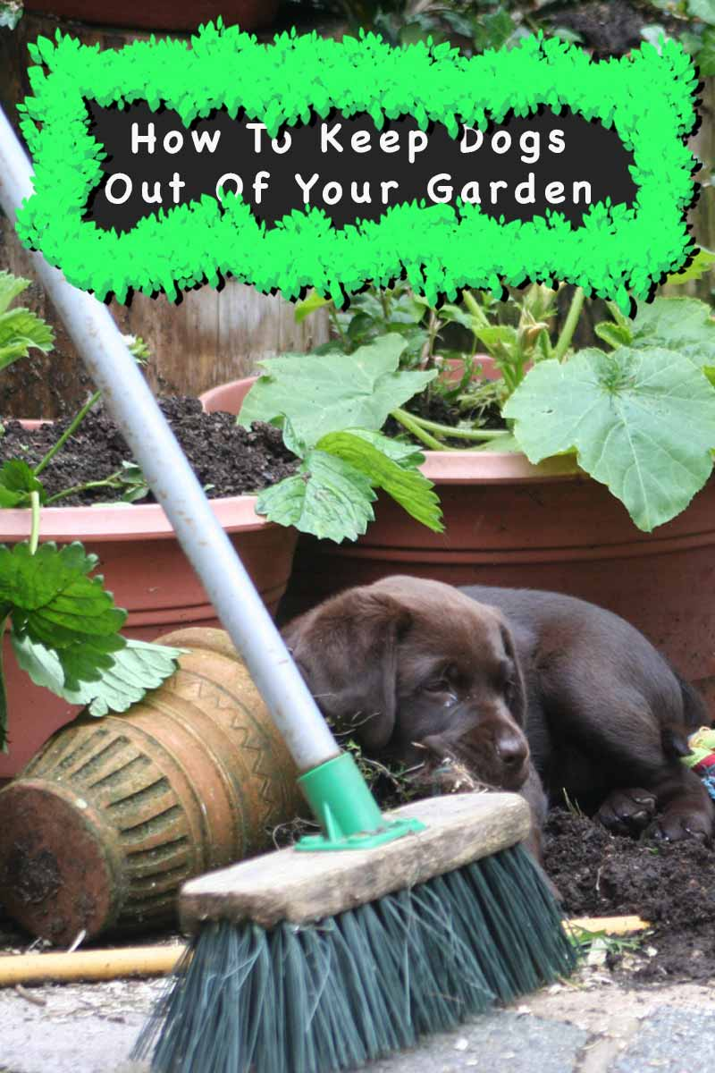 Image Result For Fence To Keep Dogs Out Of Garden