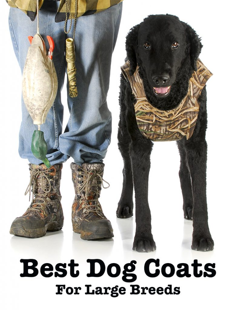 Reviews Of The Best Dog Coats For Labs And Other Large Breeds