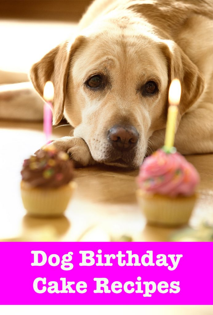 Dog Birthday Cake Recipes Easy To Elaborate Bakes