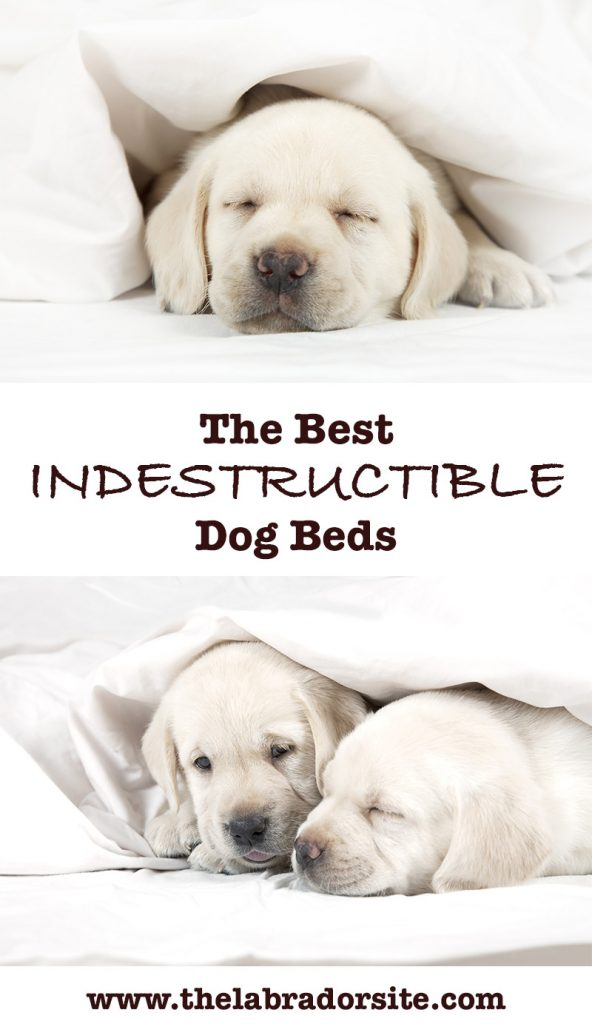 Best Beds For Dogs Who Like To Chew