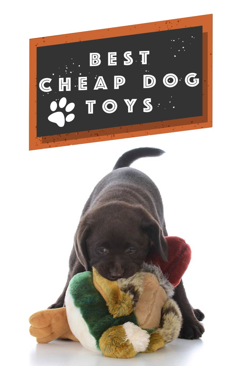 Cheap Toy Dogs : Cheap dog toys finding the best most affordable for