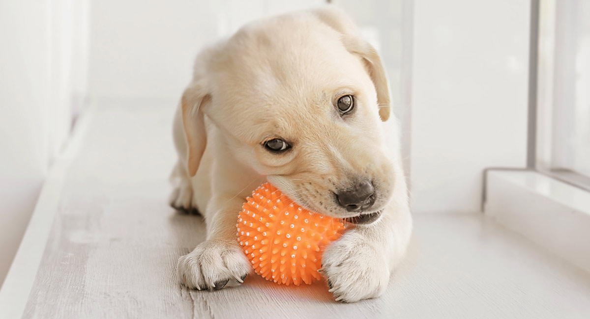 Tough Dog Names Scary Fierce Strong Guard Dog Inspired Ideas