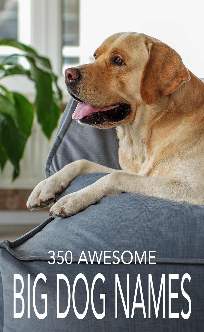 350 Awesome Big Dog Names