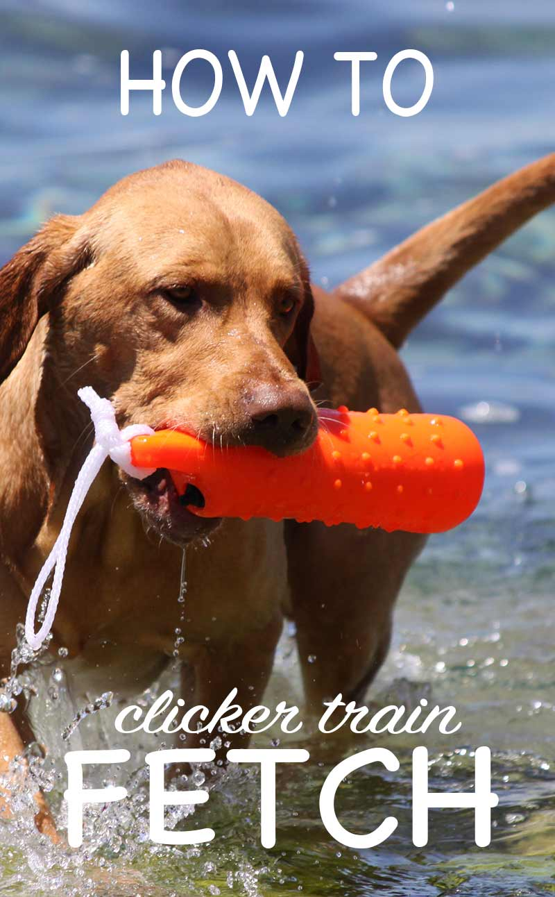 How to clicker train fetch. Teach your dog to retrieve the gentle way