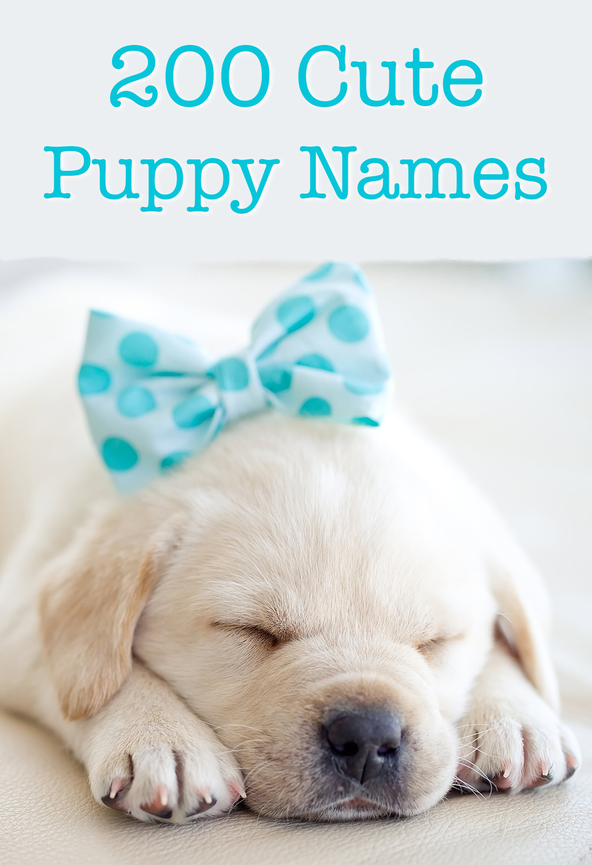 Cute puppy names over 200 adorable ideas for naming your dog cute puppy names voltagebd Gallery