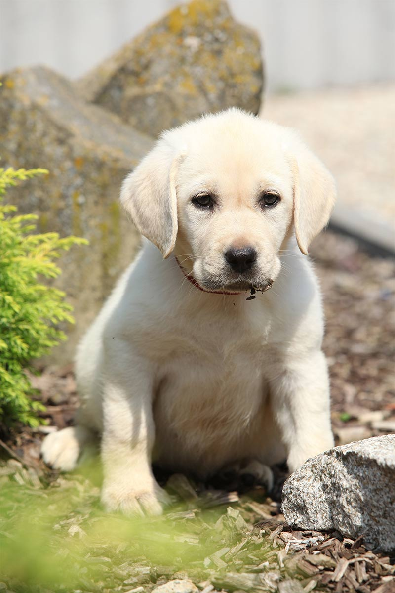 Diatomaceous Earth Can Be Harmful To Dogs