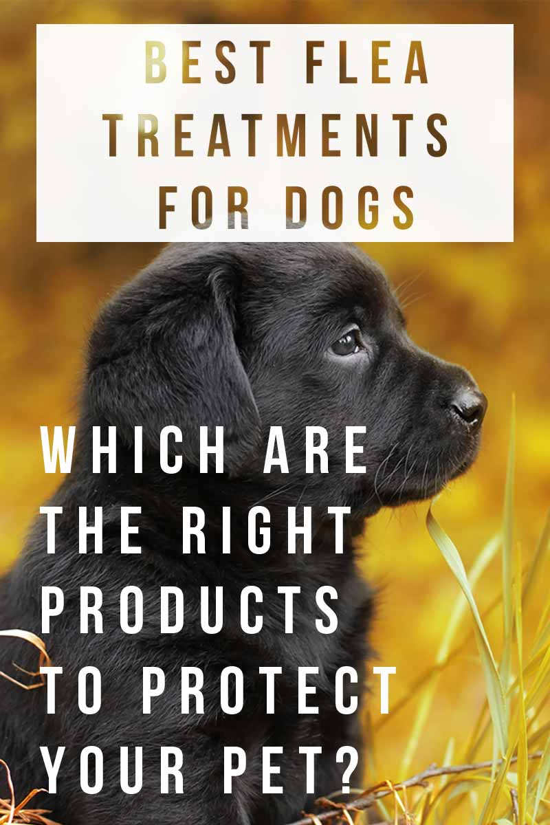 Flea Pills For Dogs What Works Best