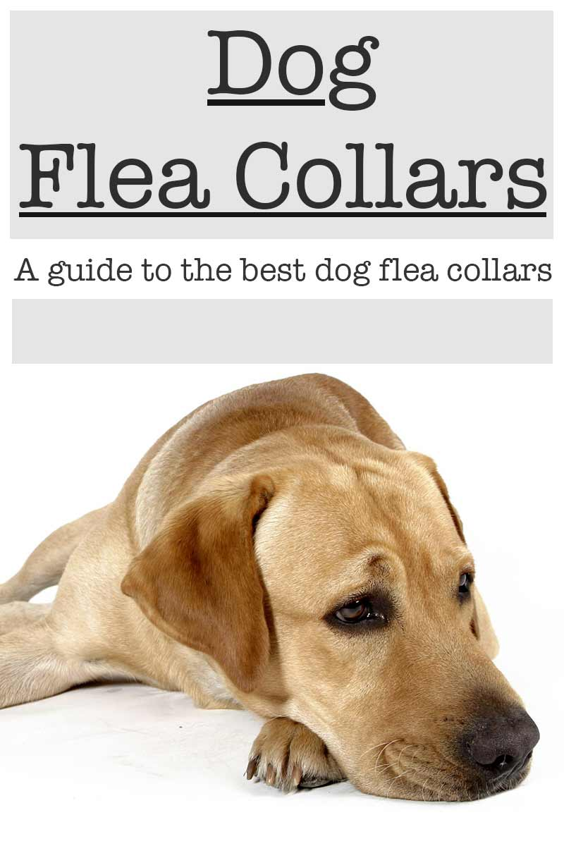 Dog Flea And Tick Collar Lasts  Months